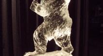 Berliner Bär - Eisbär