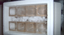 Eisgläser - Gläser aus Eis