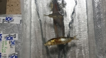 Eis-Kunst-Aquarium